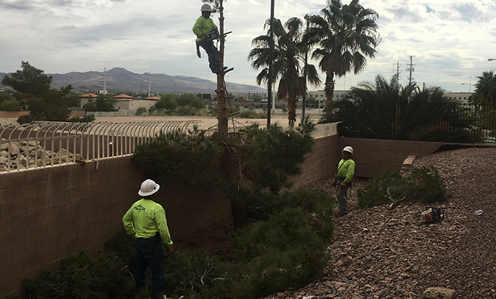 MCDM Landscape Tree Maintenance Photo 2