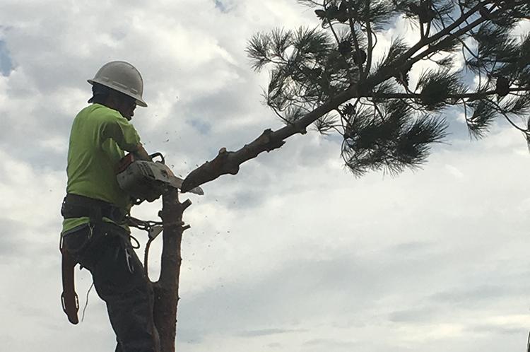 MCDM Landscape Tree Maintenance Photo 3