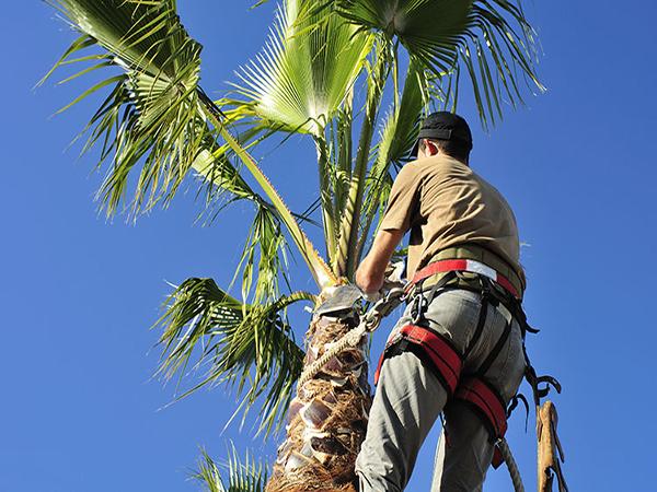 MCDM Landscape Tree Maintenance